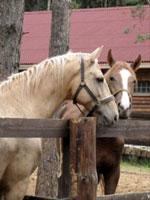 конно-спортивный клуб пегас